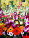 Fresh Exhibition Flowers Stock Photography