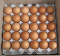 Fresh farm eggs an opened packaged tray of brown free range Royalty Free Stock Photo