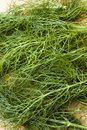 Fresh fennel leaves Stock Images