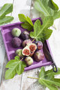 Fresh figs, Ficus carica and leaves, in purple wood tray Royalty Free Stock Photo