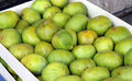 Fresh figs fruit fruits on the wood box after harvesting Royalty Free Stock Images