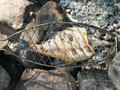 Fresh fish of a barbecue on a fire coals Royalty Free Stock Photo