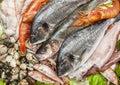 Fresh fish and clams Royalty Free Stock Photo