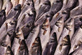 Fresh fish displayed sale market Royalty Free Stock Image