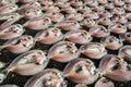 Fresh fish drying on net. Royalty Free Stock Photo