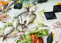 Fresh fish on French market Stock Photos
