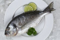 Fresh fish gilthead on a plate Royalty Free Stock Photo