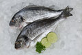 Fresh fish giltheads on ice in a supermarket Stock Photography