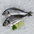 Fresh fish on ice Royalty Free Stock Photography