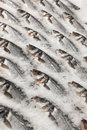 Fresh fish on ice on the market Royalty Free Stock Photos