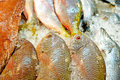 Fresh fish on ice for sale in the market thailand Royalty Free Stock Photography