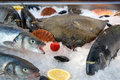 Fresh fish on ice shells vegetables and fruits Royalty Free Stock Photography
