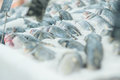 Fresh fish lie on table with ice in supermarket Stock Photo