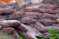 Fresh fish at market Stock Photography