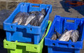 Fresh fish in plastic crates on harbour floor Stock Photo