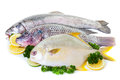 Fresh fish raw display with lemon and lime on a white background Stock Images