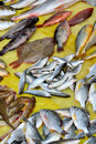Fresh fish sale on market kinds of selling shown as different various and business dealing Stock Images
