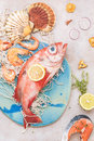 Fresh fish and seafood on fishing net Royalty Free Stock Photo