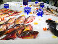Fresh fish stand Stock Images