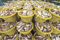 Fresh fish at Talaythai seafood market in Thailand Royalty Free Stock Photography