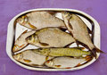 Fresh fishes in the tray after fishing Royalty Free Stock Images