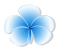 A fresh five petal blue flower illustration of on white background Stock Images