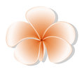 A fresh five petal flower illustration of on white background Royalty Free Stock Photo