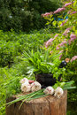 Fresh flavoring herbs and garlic on wooden stump in garden Royalty Free Stock Photo