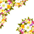 Fresh flower background with plants and flowers Royalty Free Stock Images