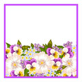 Fresh flower background with plants and flowers Stock Images