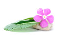 Fresh flower on zen stone spa concept white background Royalty Free Stock Photography