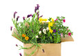 Fresh Flowers in a box Royalty Free Stock Images