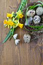 Fresh flowers and a easter nest spring rustic Stock Image