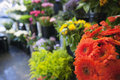 Fresh flowers at florist shop Stock Photography