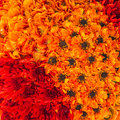 Fresh flowers full frame of tightly packed colorful Royalty Free Stock Photo