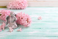 Fresh flowers hyacinths  and angel  on turquoise  painted wooden Royalty Free Stock Photo