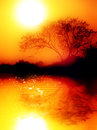 Fresh foggy morning near lake reflection water warm orange tones photo give feeling warmth beauty nature huge sun tree silhouette Stock Photo