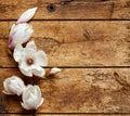Fresh fragrant spring magnolias Royalty Free Stock Photo