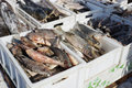 Fresh frozen fish in plastic boxes sold on the market Royalty Free Stock Photo
