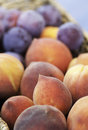 Fresh fruit basket of freshly picked peaches and plums Stock Photo