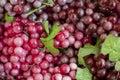 Fresh fruit grapes grapes,fresh Royalty Free Stock Photos
