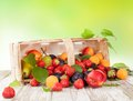 Fresh fruit harvested in basket Royalty Free Stock Image