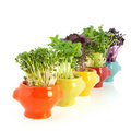 Fresh garden cress in colorful crockery Royalty Free Stock Images