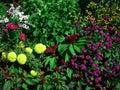 Fresh Garden Flowers Royalty Free Stock Photos