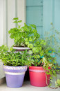 Fresh garden herbs in pots Stock Photo