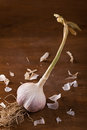 Fresh garlic bulb of on the table Stock Photos