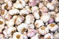 Fresh garlic bulbs for sale Royalty Free Stock Photo