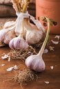 Fresh garlic bunch of on the table Stock Image