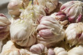 Fresh garlic nice new harvested Royalty Free Stock Photography