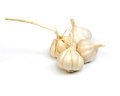 Fresh garlic on white background Stock Image